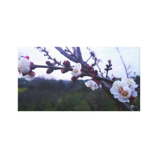 Spring Tree Canvas Print