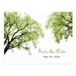 Spring Trees 2 - Save The Date Postcard at Zazzle