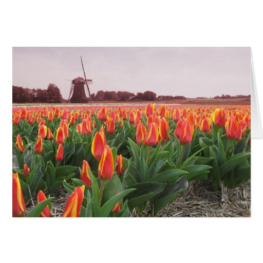 Spring Tulip Time Flower Field and Windmill Card