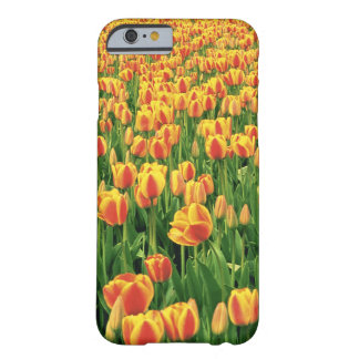 Spring tulips bloom in front of old barn. barely there iPhone 6 case
