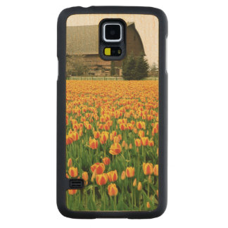 Spring tulips bloom in front of old barn. carved® maple galaxy s5 case