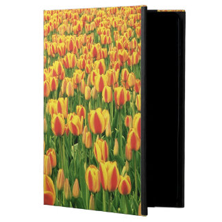 Spring tulips bloom in front of old barn. cover for iPad air