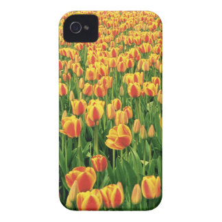 Spring tulips bloom in front of old barn. iPhone 4 Case-Mate case