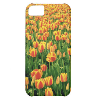 Spring tulips bloom in front of old barn. iPhone 5C cover