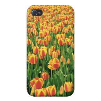 Spring tulips bloom in front of old barn iPhone 4/4S covers