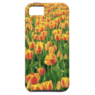 Spring tulips bloom in front of old barn. iPhone SE/5/5s case