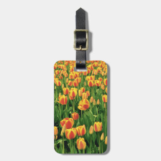 Spring tulips bloom in front of old barn. bag tags