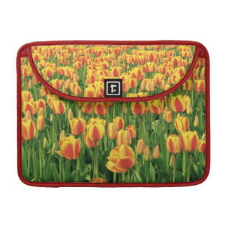 Spring tulips bloom in front of old barn. MacBook pro sleeve