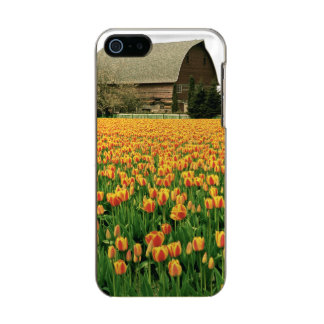 Spring tulips bloom in front of old barn. metallic iPhone SE/5/5s case
