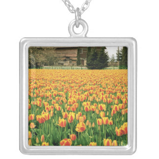 Spring tulips bloom in front of old barn. silver plated necklace