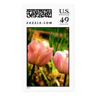 Spring Tulips (Large) Stamp