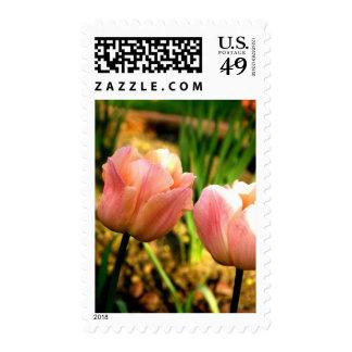 Spring Tulips (Medium) Stamps