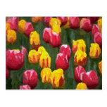 Spring Tulips Postcard