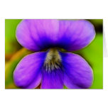 Spring Violet - Purple Power! Greeting Cards