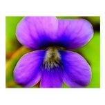 Spring Violet - Purple Power! Postcard