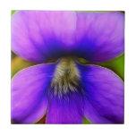 Spring Violet - Purple Power! Tile