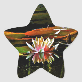 SPRING WATER LILY IN A POND STAR STICKER