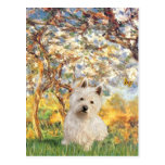 Spring - Westie 1 Post Cards