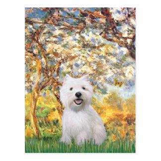 Spring - Westie 2 Postcard