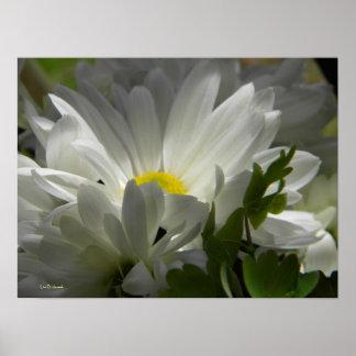 Spring white 1 print