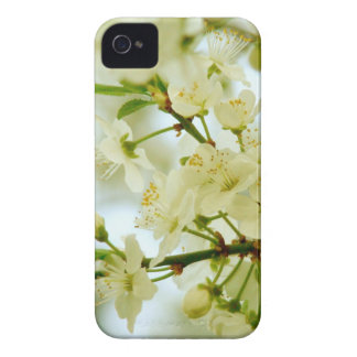 Spring White Blossom Tree Photo iPhone 4/4S Case iPhone 4 Case-Mate Cases