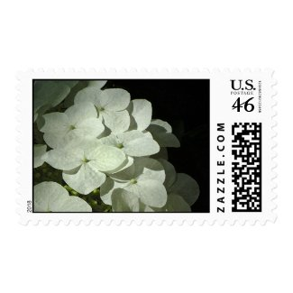 Spring White Hydrangea Postage Stamps