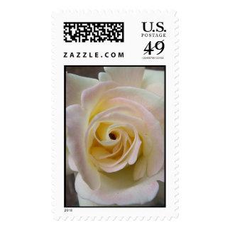Spring White Rose Stamps