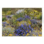 Spring wildflowers Card