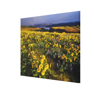 Spring wildflowers in abundance at the Tom Canvas Print