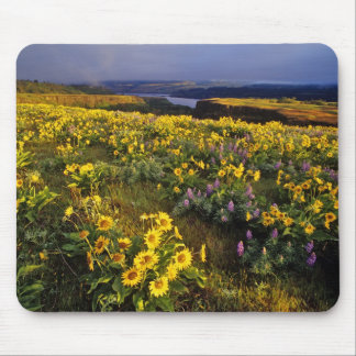 Spring wildflowers in abundance at the Tom Mouse Pad