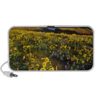 Spring wildflowers in abundance at the Tom iPod Speaker