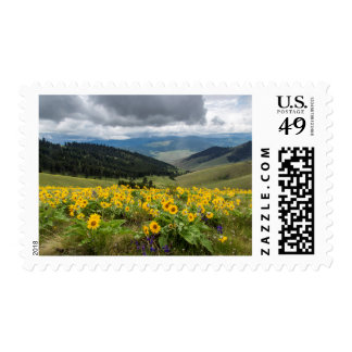 Spring Wildflowers In The Hills Stamp