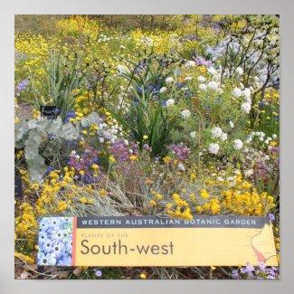 Spring Wildflowers of Western Australia Poster print
