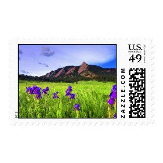 Spring Wildflowers Postage Stamp