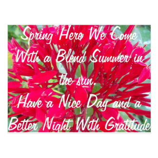 Spring With a Blend of Summer in the Sun Post Card