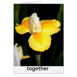 spring yellow card