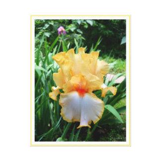 Spring Yellow Irises in Garden Canvas Print