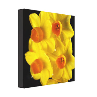 Spring Yellow Jonquils Canvas Print