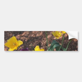 Spring yellow tulip type flowers bumper sticker