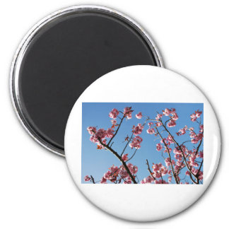 SpringBlossoms050109 2 Inch Round Magnet