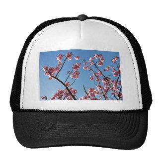 SpringBlossoms050109 Gorros
