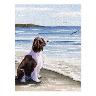 Springer Spaniel At The Beach Postcard