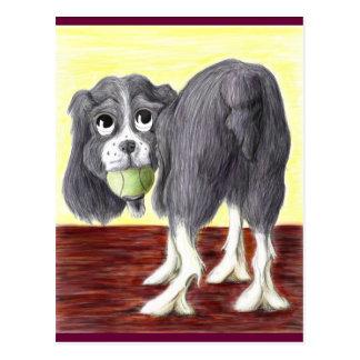Springer Spaniel Caricature Postcard