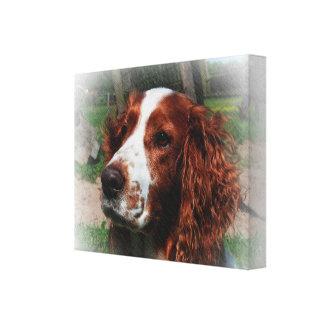 Springer Spaniel Dog Art Canvas Print