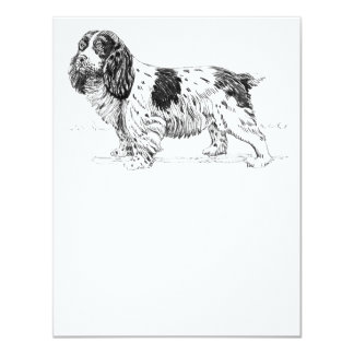 Springer Spaniel Dog Drawing Card