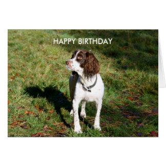 Springer Spaniel HAPPY BIRTHDAY card