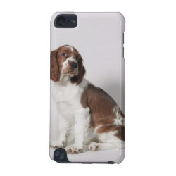 Case-Mate Barely There 5th Generation iPod Touch Case with Springer Spaniel Phone Cases design
