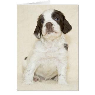 Springer Spaniel Puppy Card