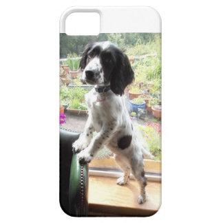 Springer Spaniel Puppy iPhone SE/5/5s Case
