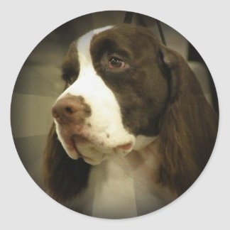 Springer Spaniel Sticker